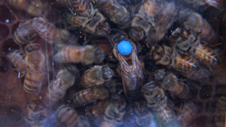 bees-stuff-050-resize.jpg