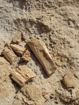 bone-fragmentsresize.jpg