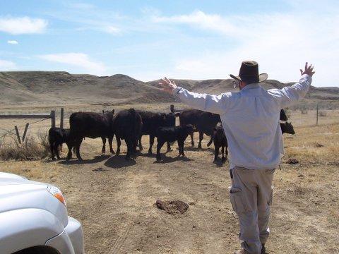 david-scares-cows.jpeg