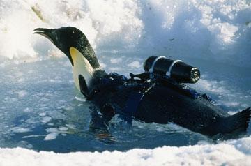 Crittercam Penguin