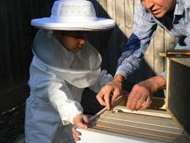 bees-stuff-005-resize.jpg