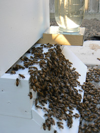 bees-stuff-029-resize.jpg