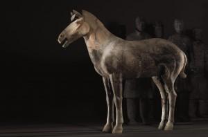 cavalry-horse