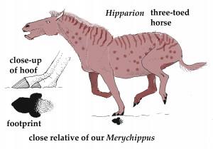 hipparioncolor-copy