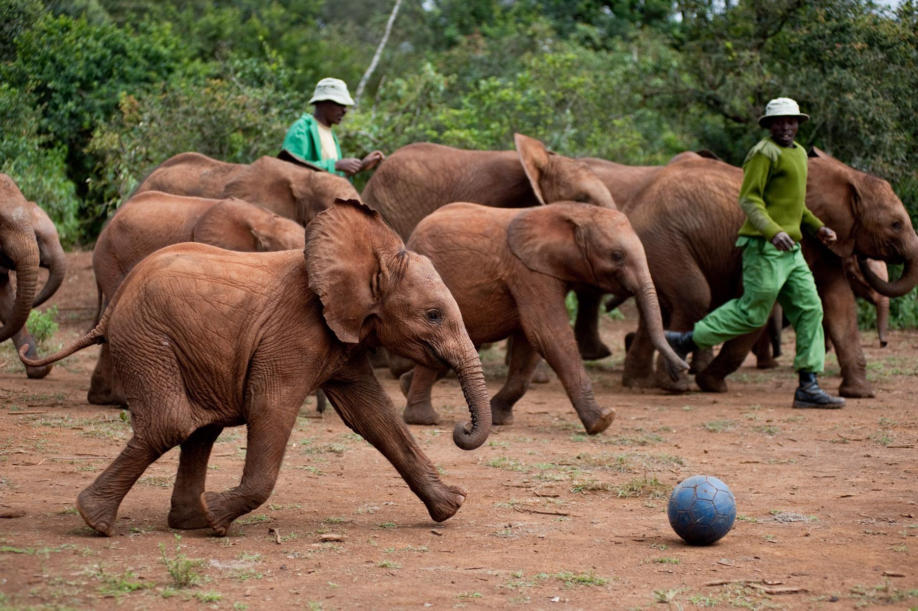 David Sheldrick Wildlife Trust | BEYONDbones