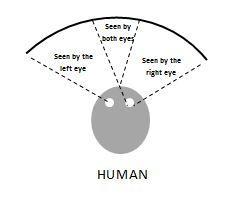 humanvision