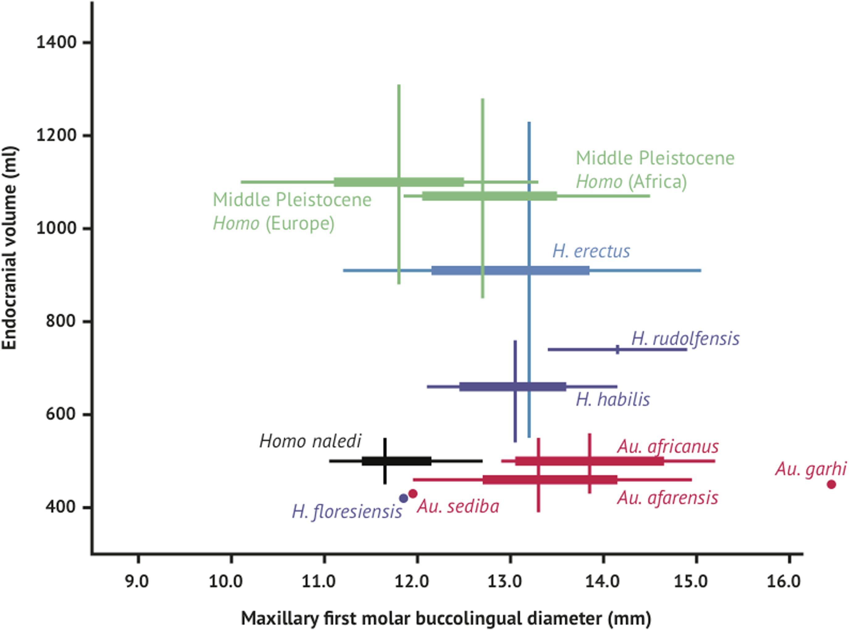 Homo naledi - brain size - range