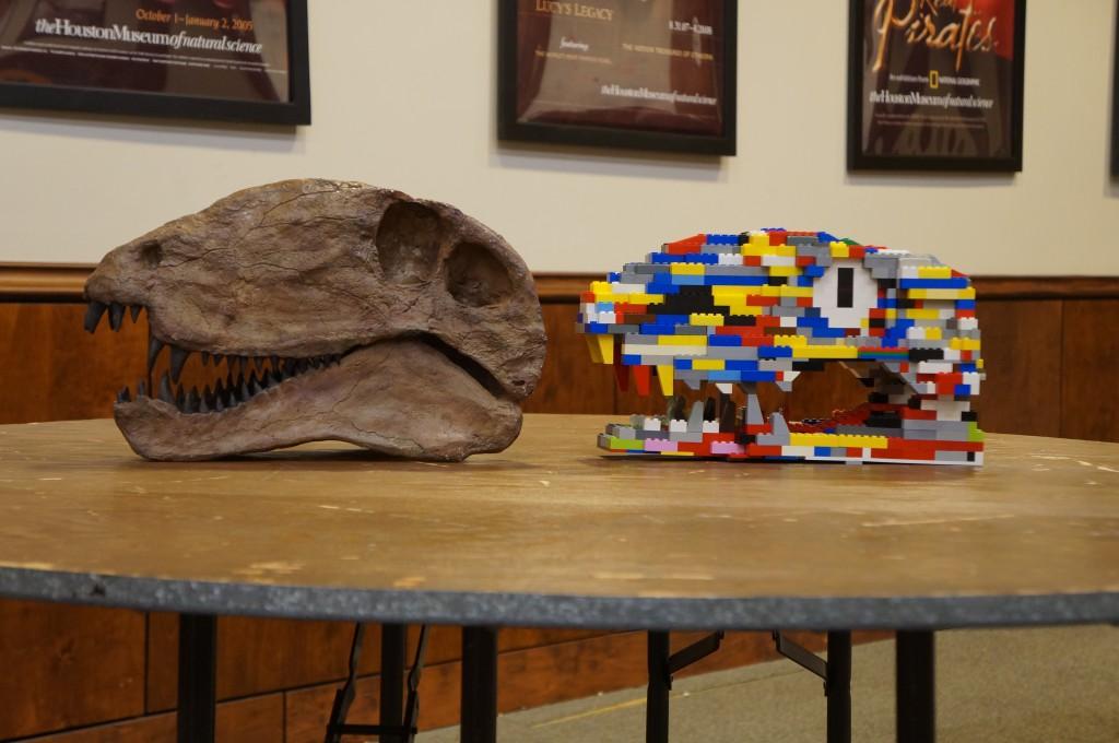Dimetrodon skull and skull