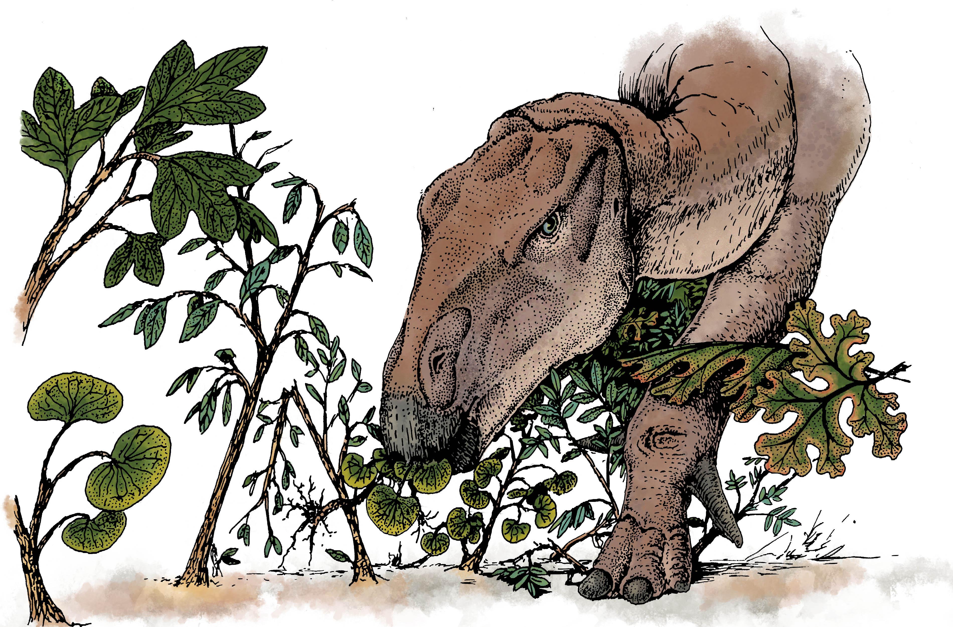 Amber Iguanodon 2016001