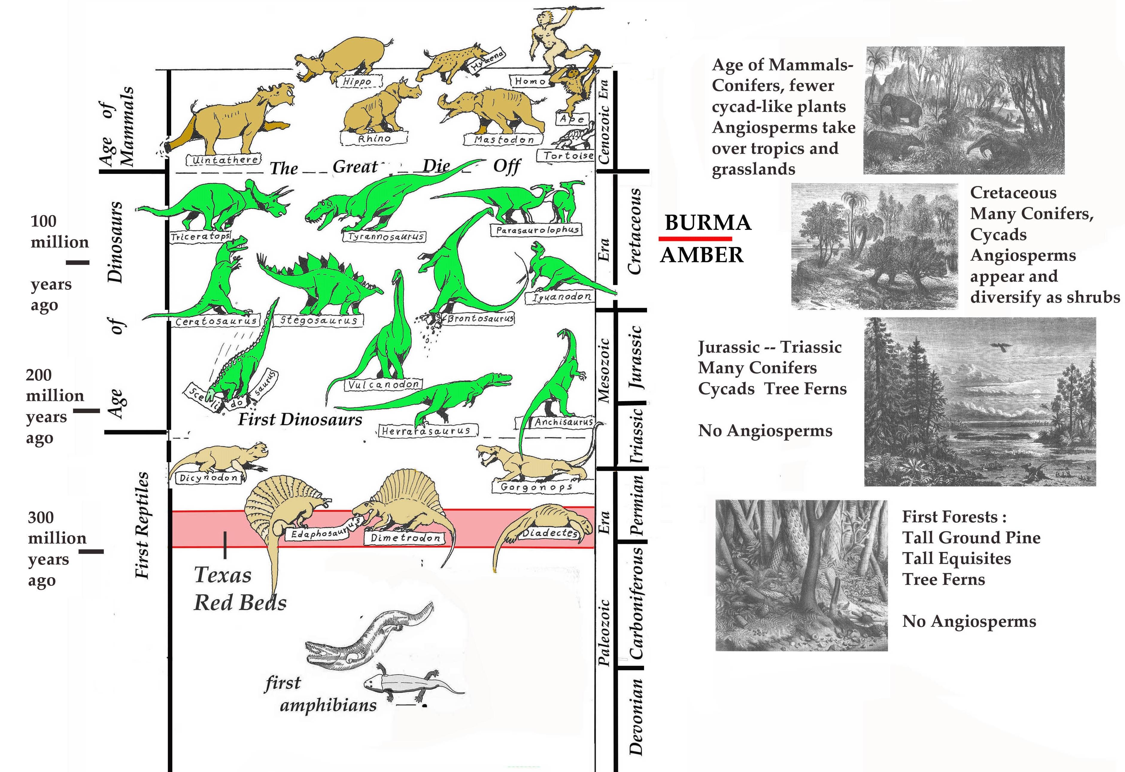 amber time chart forest FFFFF vertical copy