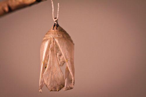 empty-chrysalis