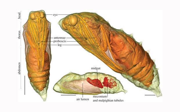 inside-a-chrysalis