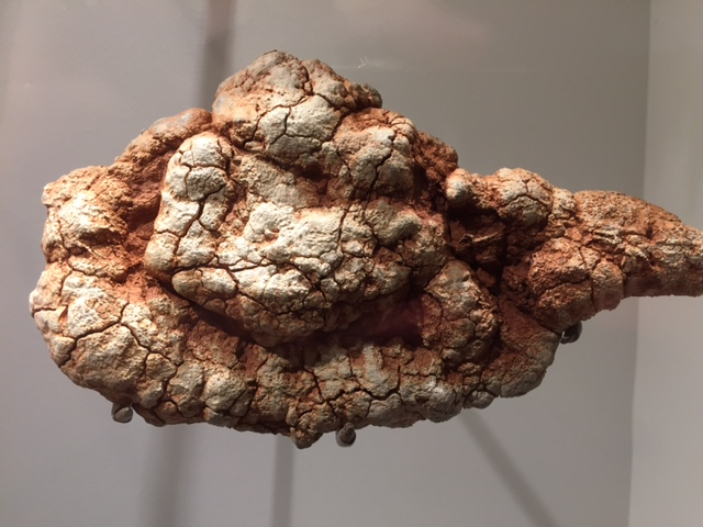 coprolite1