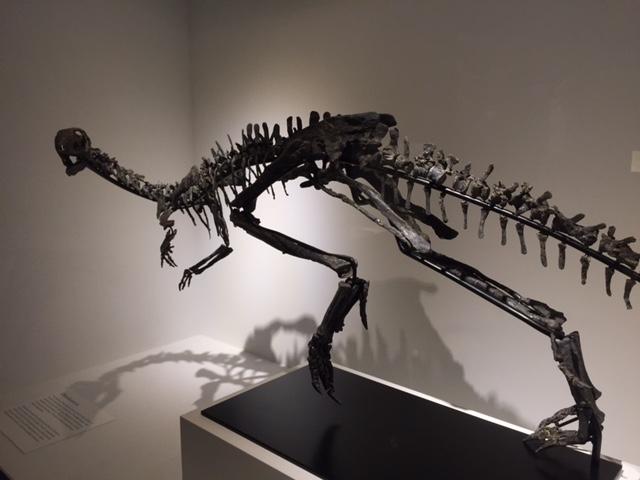 othnielosaurus1