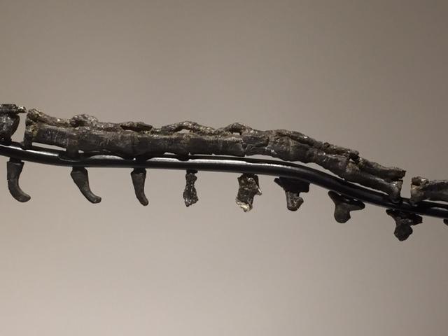 othnielosaurus4